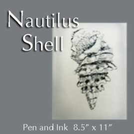 Poetry and Imagination - Nautilus Shell in Pen and Ink